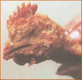 chickennugget.jpg